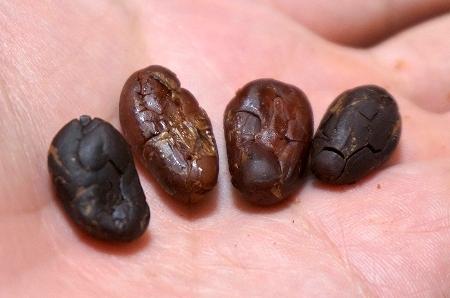 カカオ豆からチョコレートを作成!Bean to Bar Project