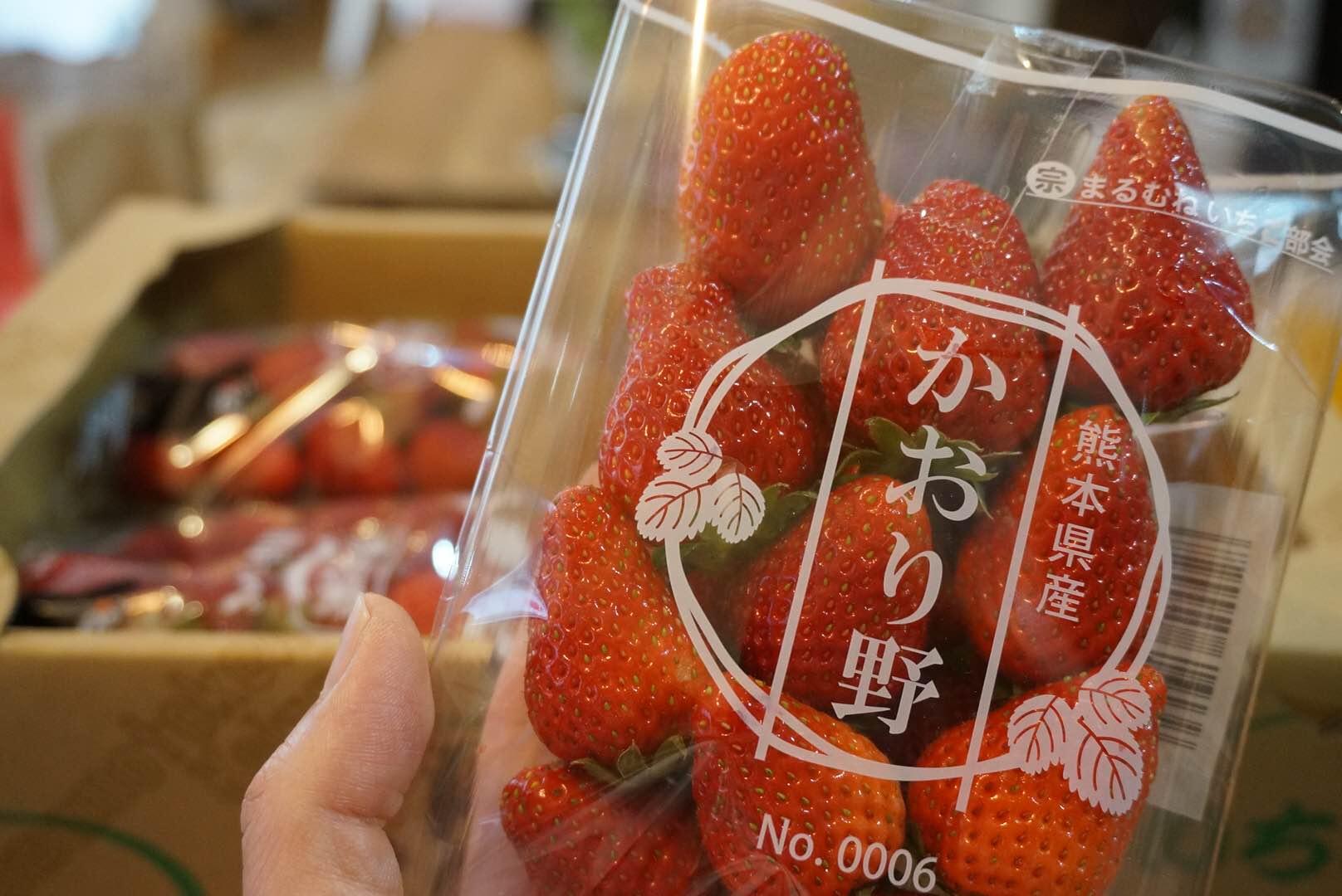 熊本県産 いちご かおり野